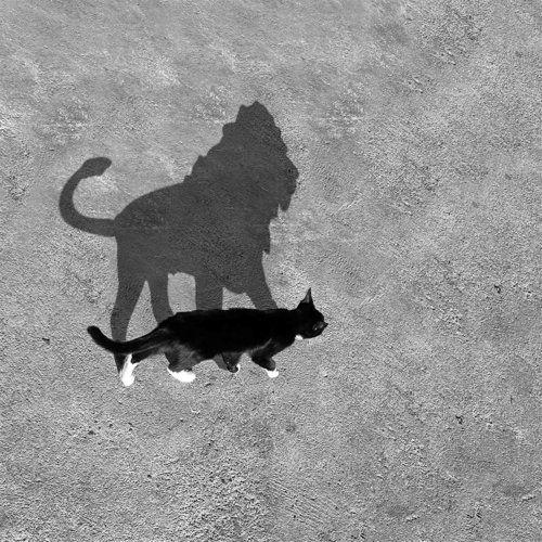 kat-leeuw