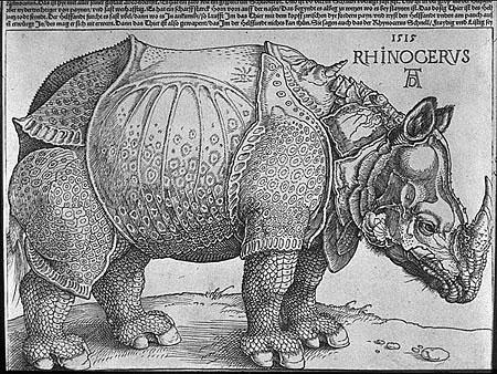 durer_rhino