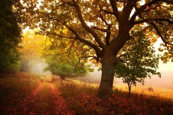 12c04-_meditation_of_autumn__by_janek_sedlar-d5ggia7