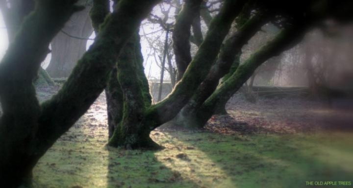 OldAppleTrees.jpg