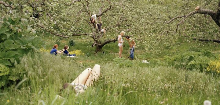 orchard 001 1440x690