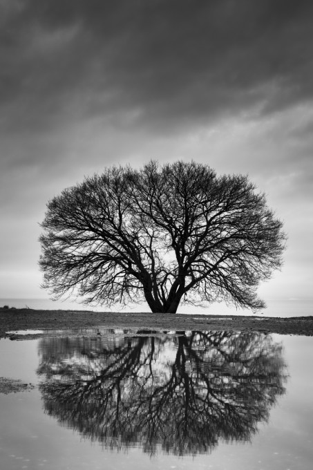 Tree and reflection, Lake Biwa, Shiga Prefecture, Japan