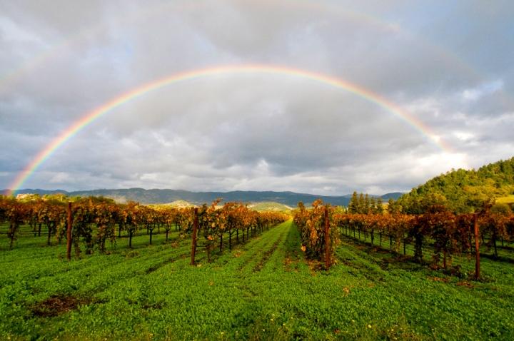 02_Rainbow_Nature_photography_class-ArtClarity_Napa_