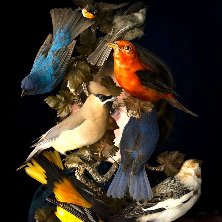 01.BirdsOfNewEngland