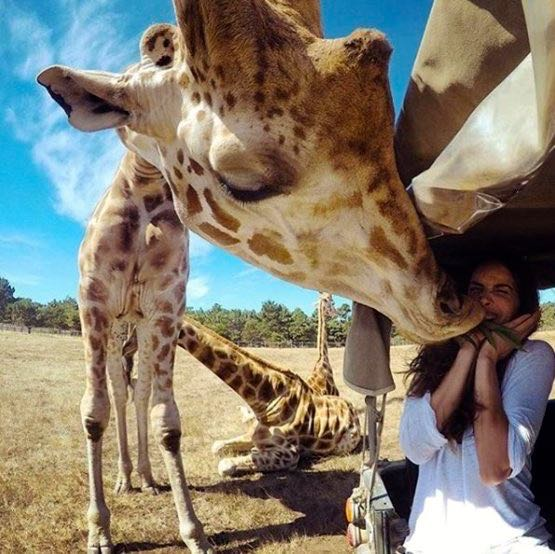 who-wants-a-kiss-from-a-giraffe-photo-from